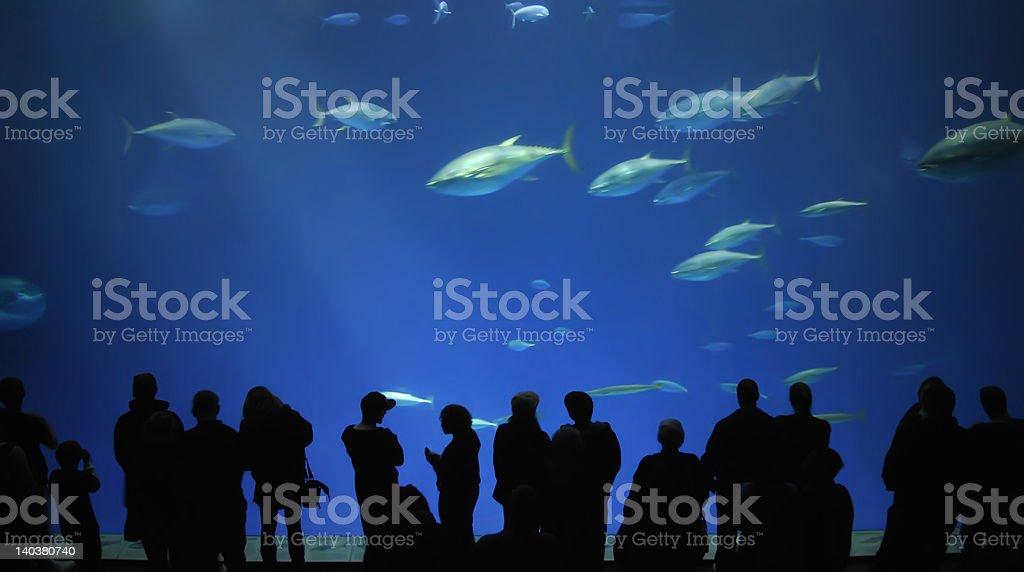 Fish Watching royalty-free stock photo