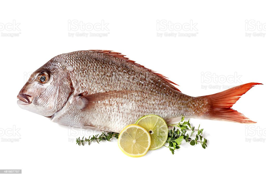 Fish with Lemon Lime and Herbs Isolated stock photo
