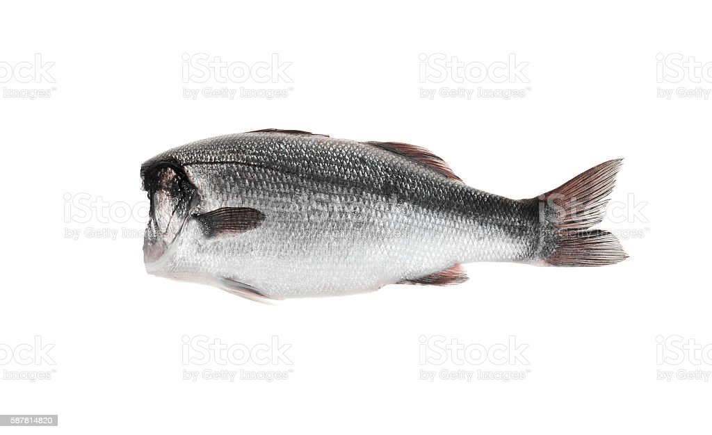fish without head stock photo