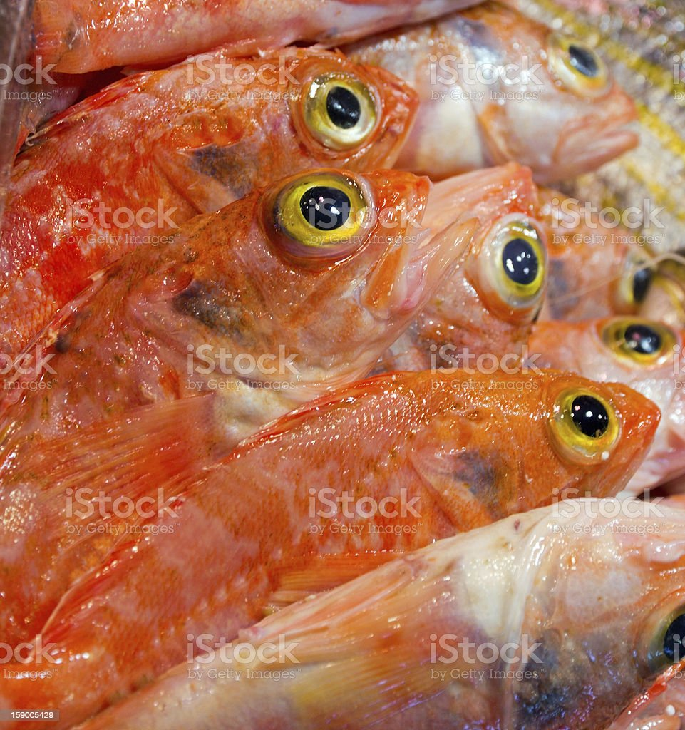fish yellow eye royalty-free stock photo