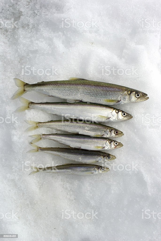 Fish3 royalty-free stock photo