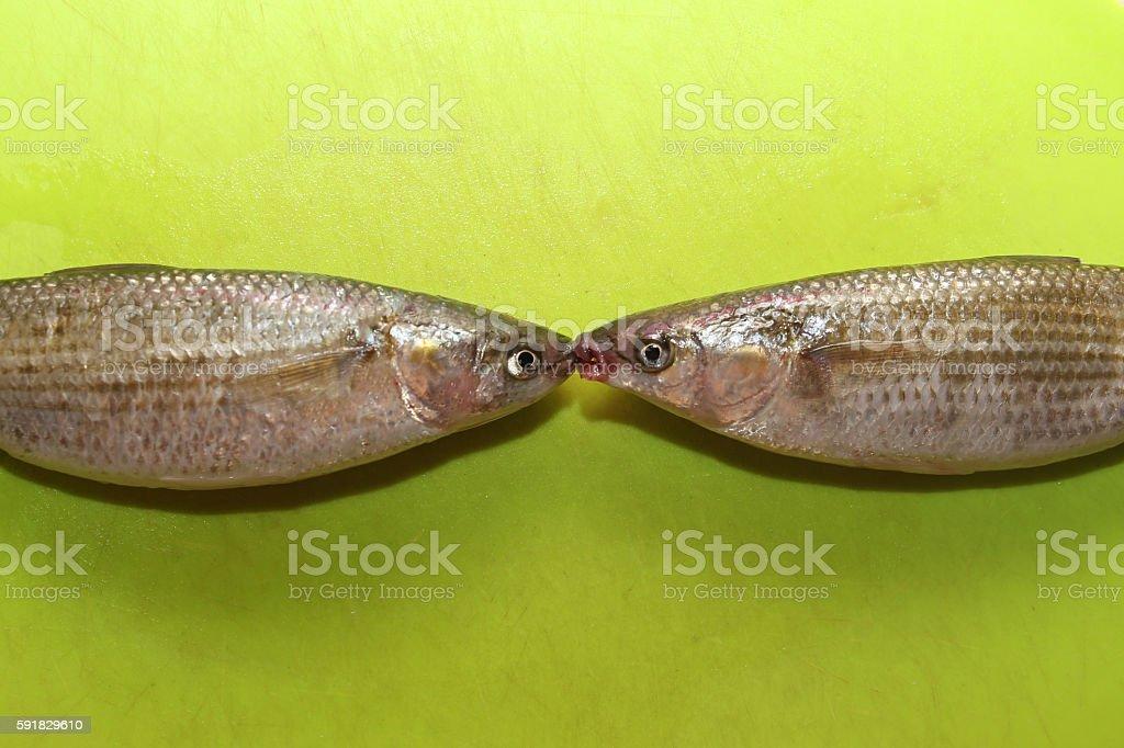 Fish_Kiss stock photo