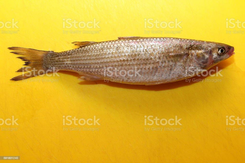 Fish_On_Board stock photo