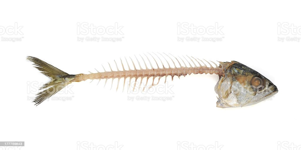 Fishbone royalty-free stock photo