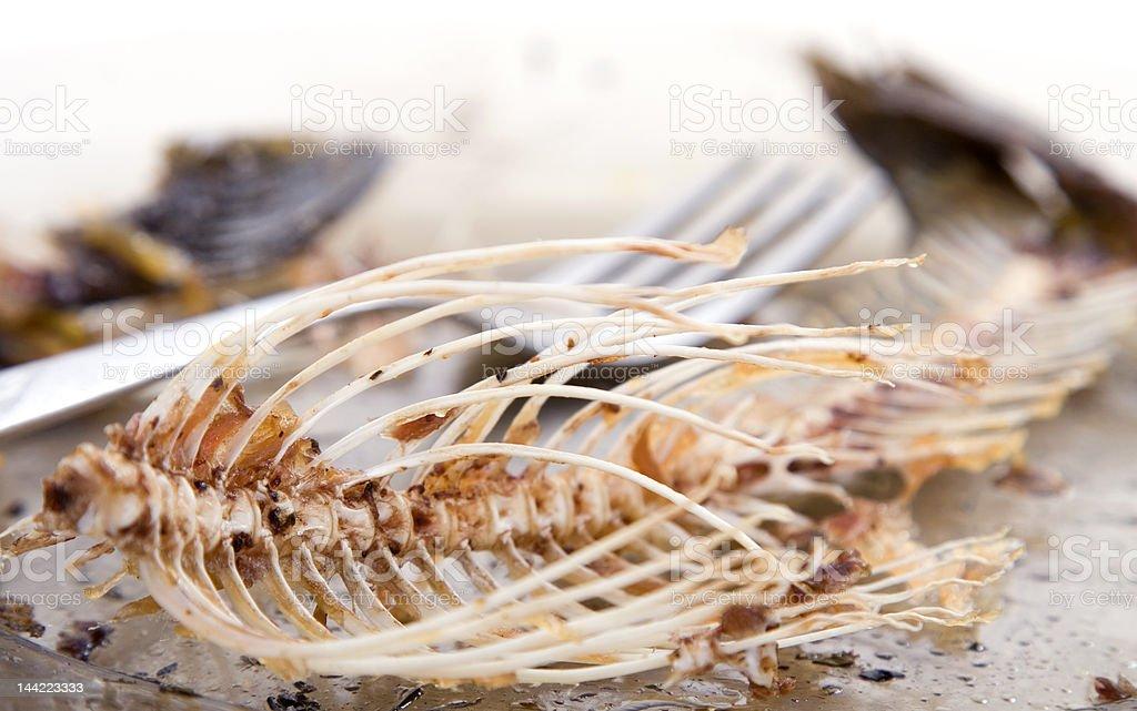 fishbones on  plate stock photo