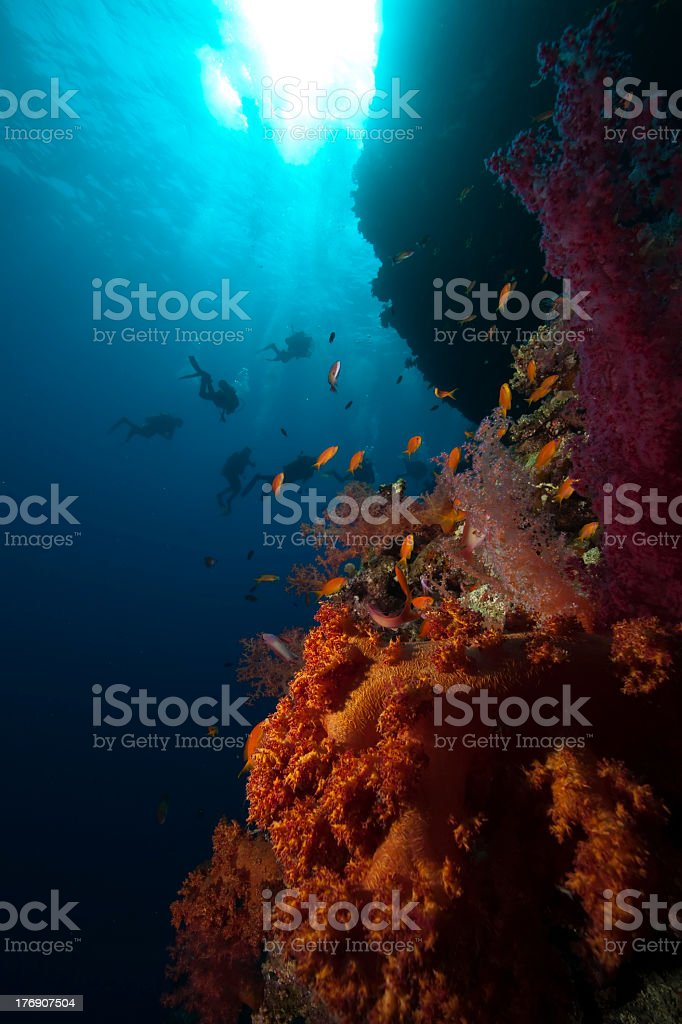 fish,divers and ocean royalty-free stock photo