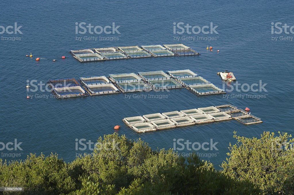 Fisheries stock photo