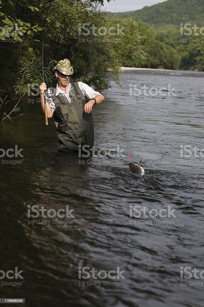 Fisherman catches of salmon royalty-free stock photo