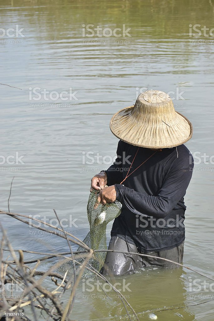 fisherman hunting fish in countryside pond of Thailand royalty-free stock photo