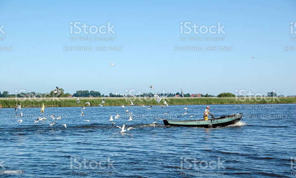 Fisherman in small boat on lake in Friesland followed by gulls stock photo
