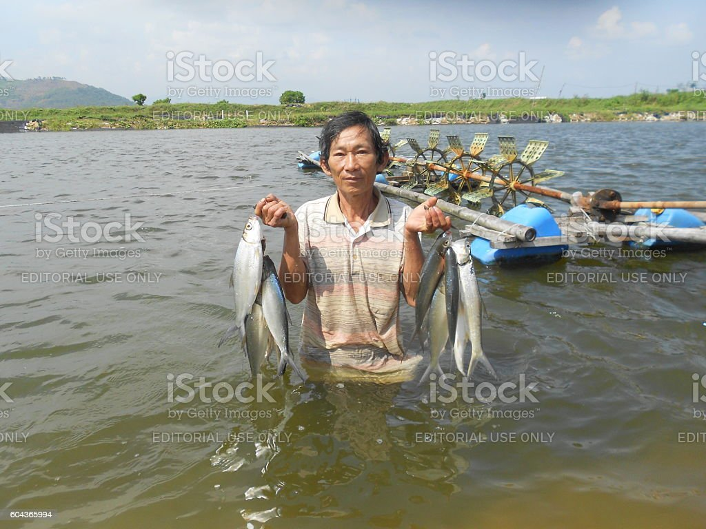 fisherman is showing many milkfish that he caught stock photo