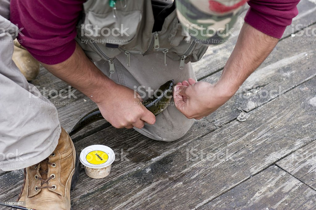 Fisherman Removing Hook from a Small Salmon stock photo