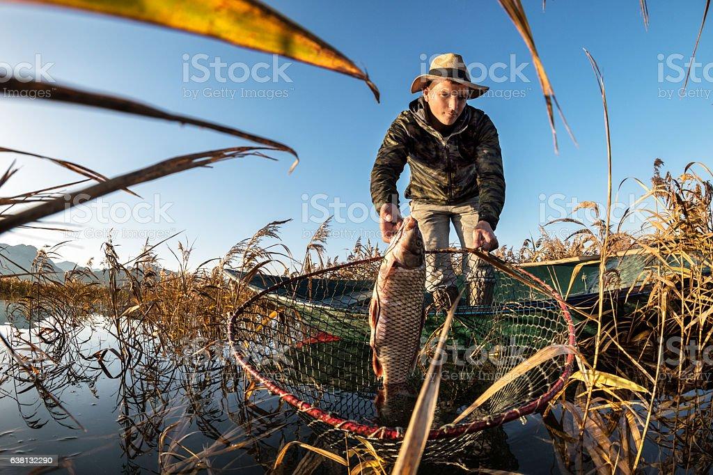 Fisherman taking out carp fish stock photo
