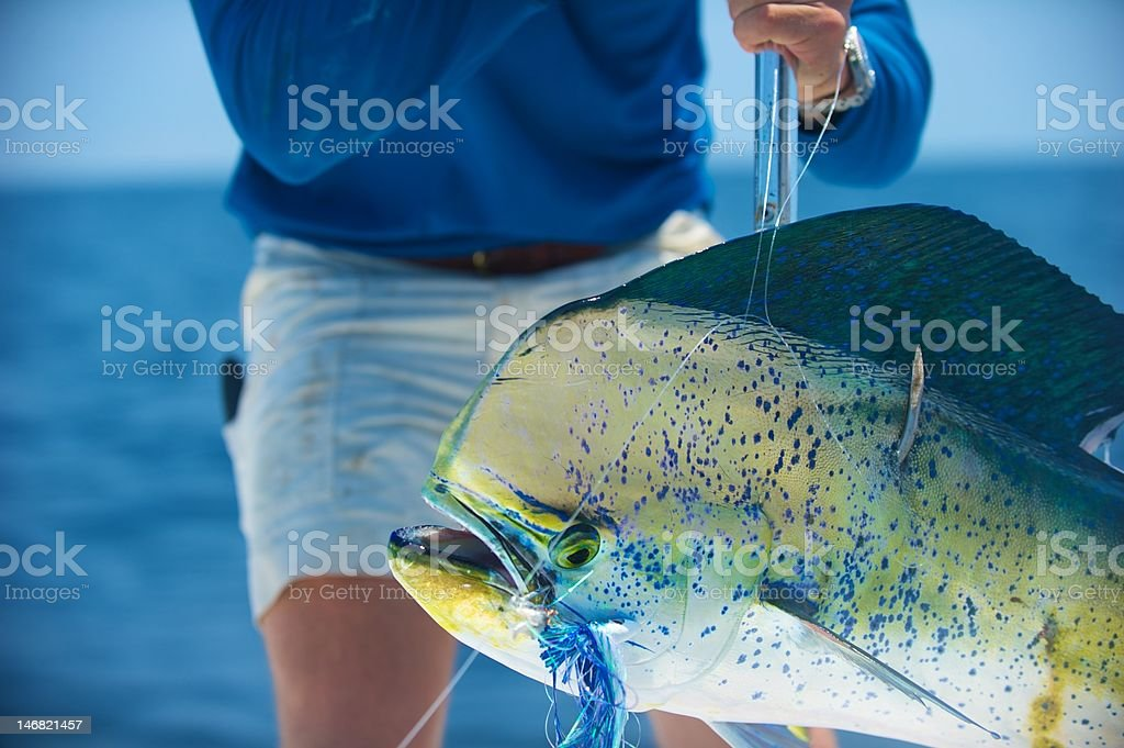 Fisherman with a Dolphin Fish or Dorado stock photo