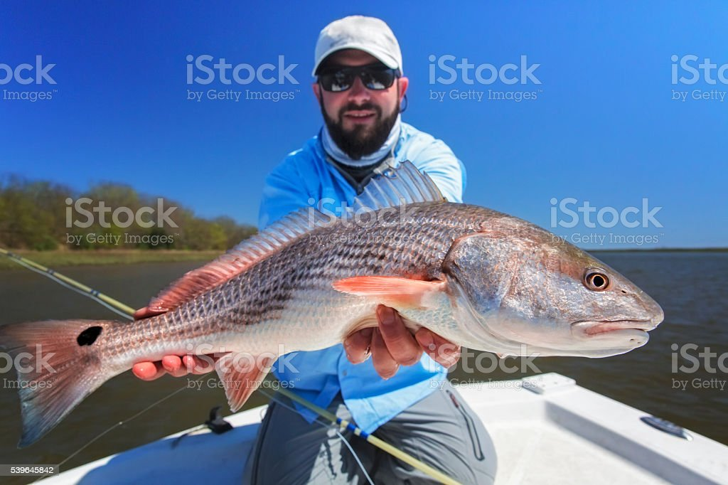 Fisherman with a large redfish stock photo