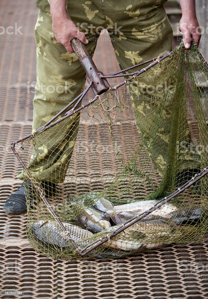 Fisherman with captured carps in the nets stock photo
