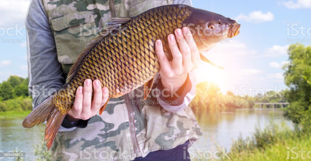 Fisherman with carp in hands on a background of the river. stock photo