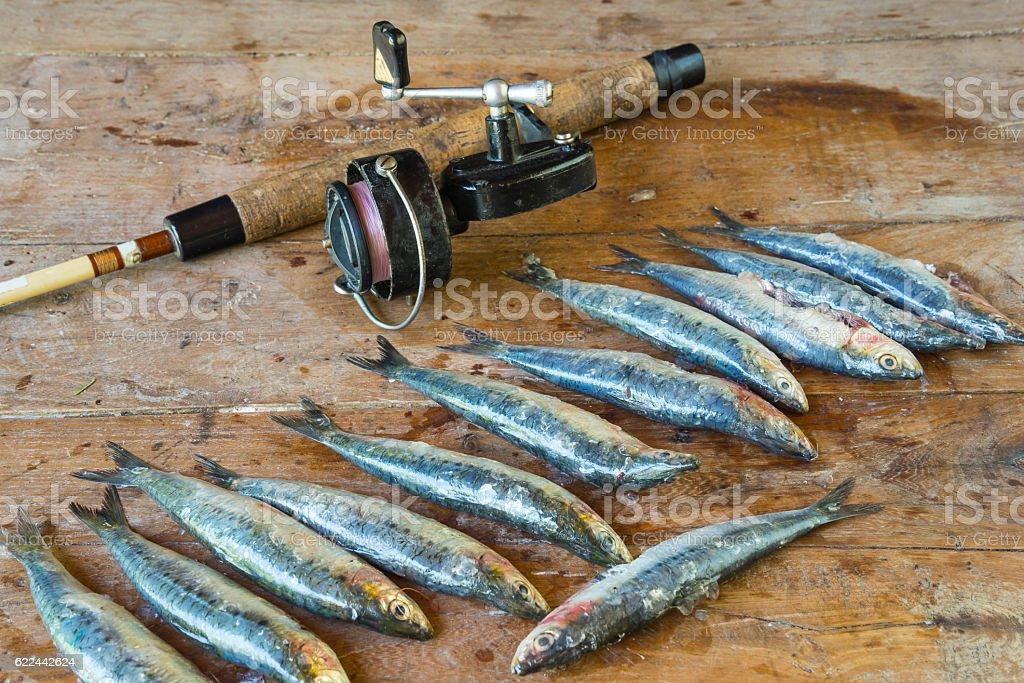 Fisherman's catch stock photo