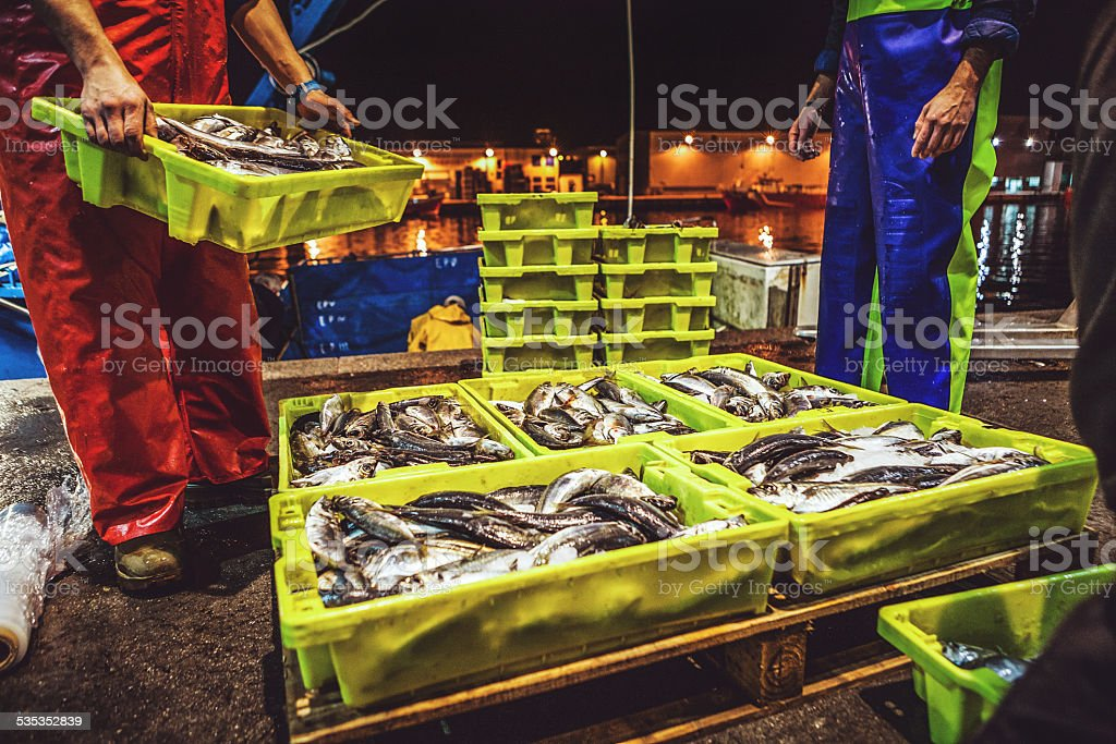 Fishermen at work: fish just landed stock photo