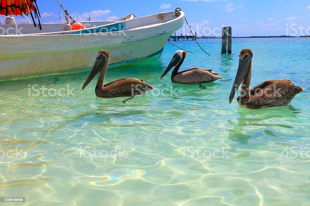 Fishermen boat anchored, pelicans sea birds - caribbean tropical beach stock photo