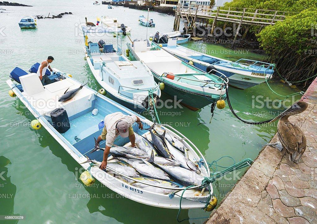 Fishermen Done Unloading Tunafish at Puerto Ayora Fish Market stock photo