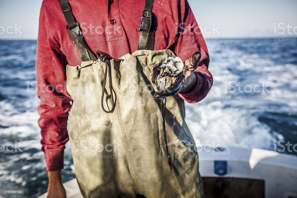 Fishermen hands black for squids royalty-free stock photo