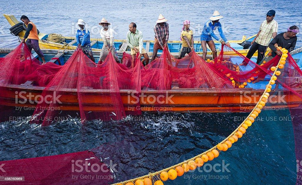 Fishermen haul in a net full of sardine, Kerala, India. royalty-free stock photo