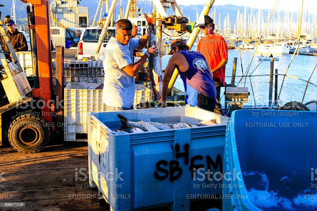 Fishermen hauling Sea Bass at Santa Barbara harbor stock photo