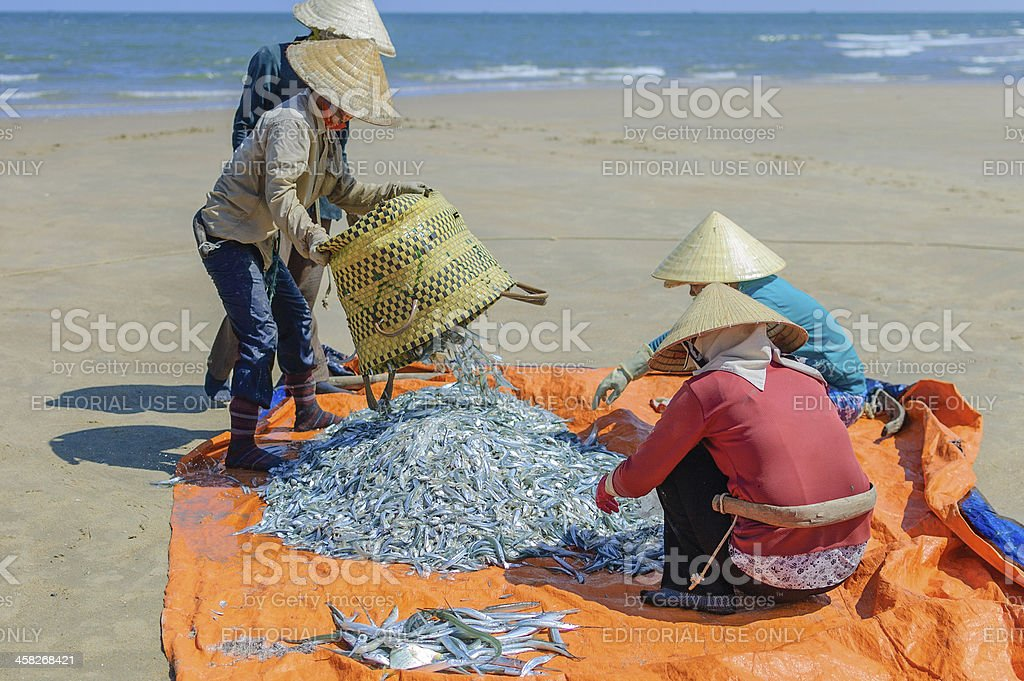 Fishermen with fresh catch of fish, Vung Tau province, Vietnam royalty-free stock photo