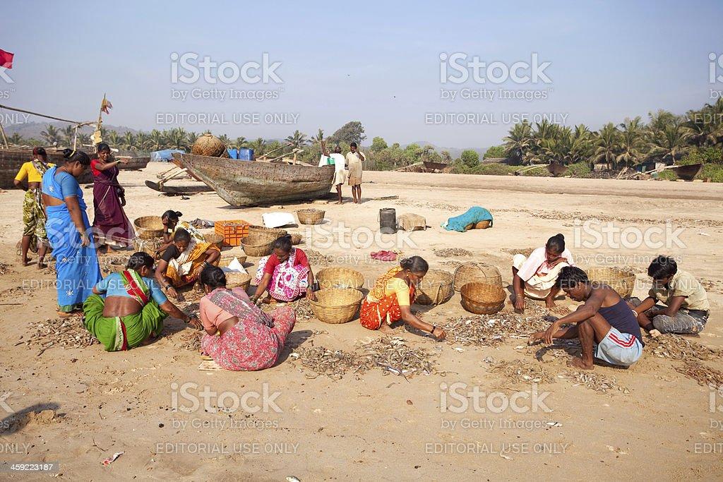Fishermen working at Guhagar Beach in Ratnagiri District, India royalty-free stock photo