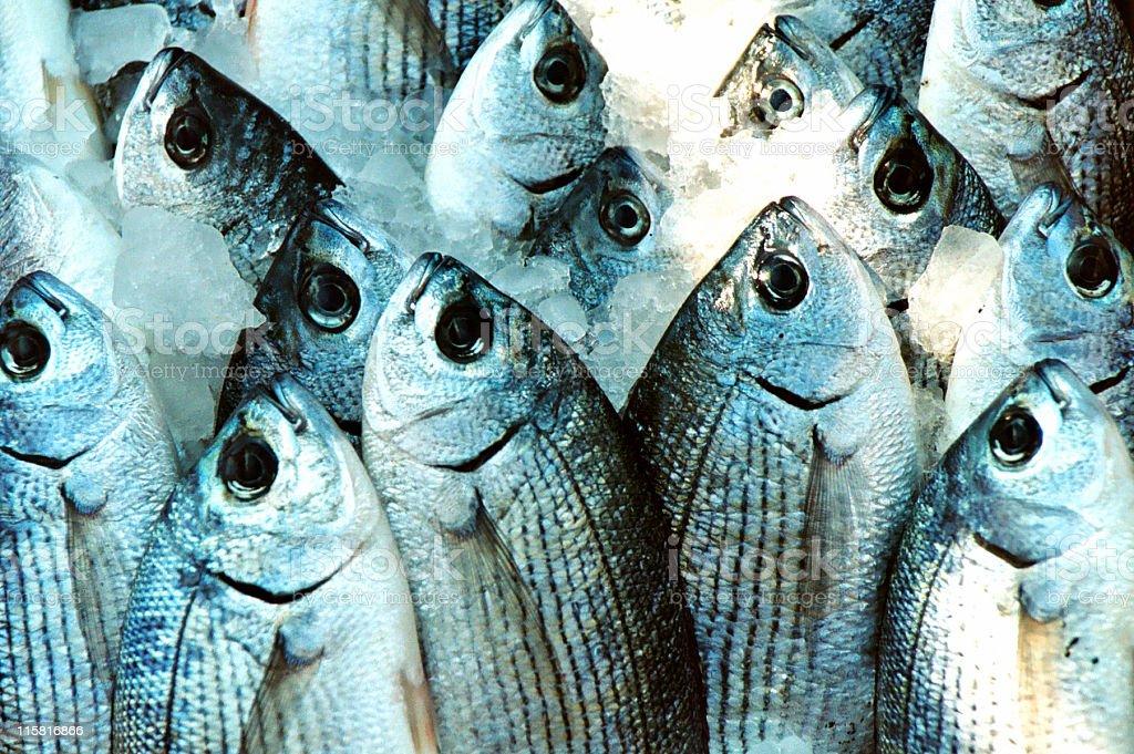 fishes bulk #2 royalty-free stock photo