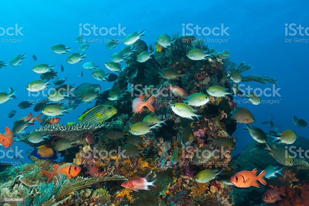 Fishes Everywhere! Busy Sealife, Mauwang Island, Komodo National Park, Indonesia stock photo