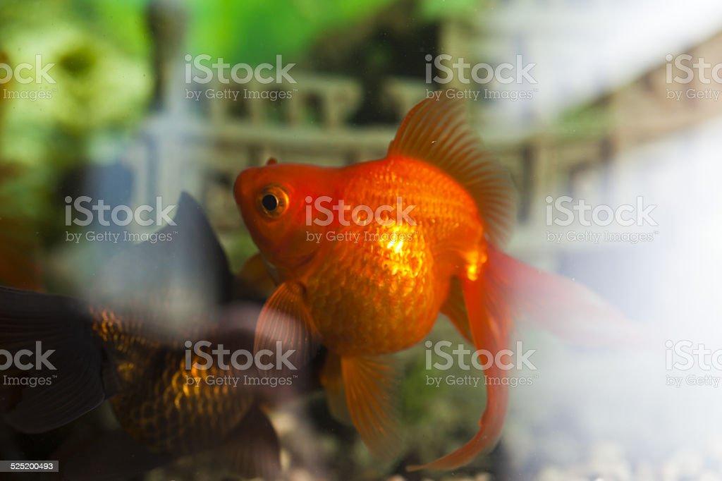 Fishes in an aquarium stock photo