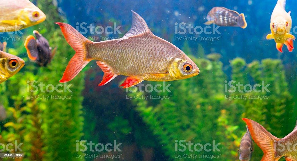 Fishes in aquarium stock photo