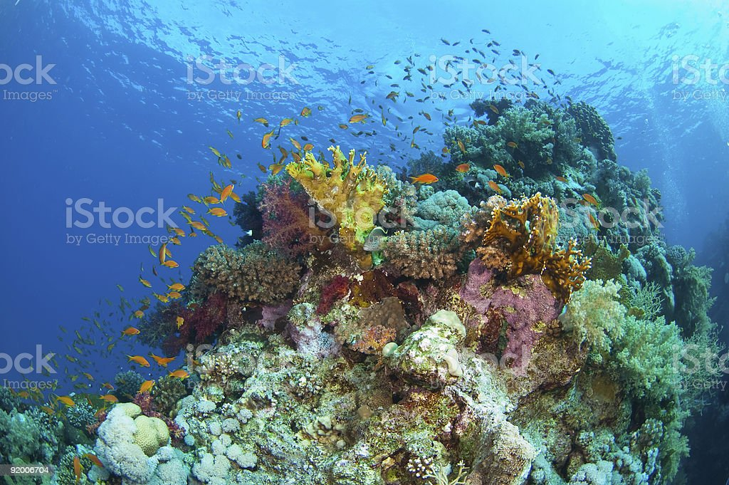 Fishes in blue sea stock photo