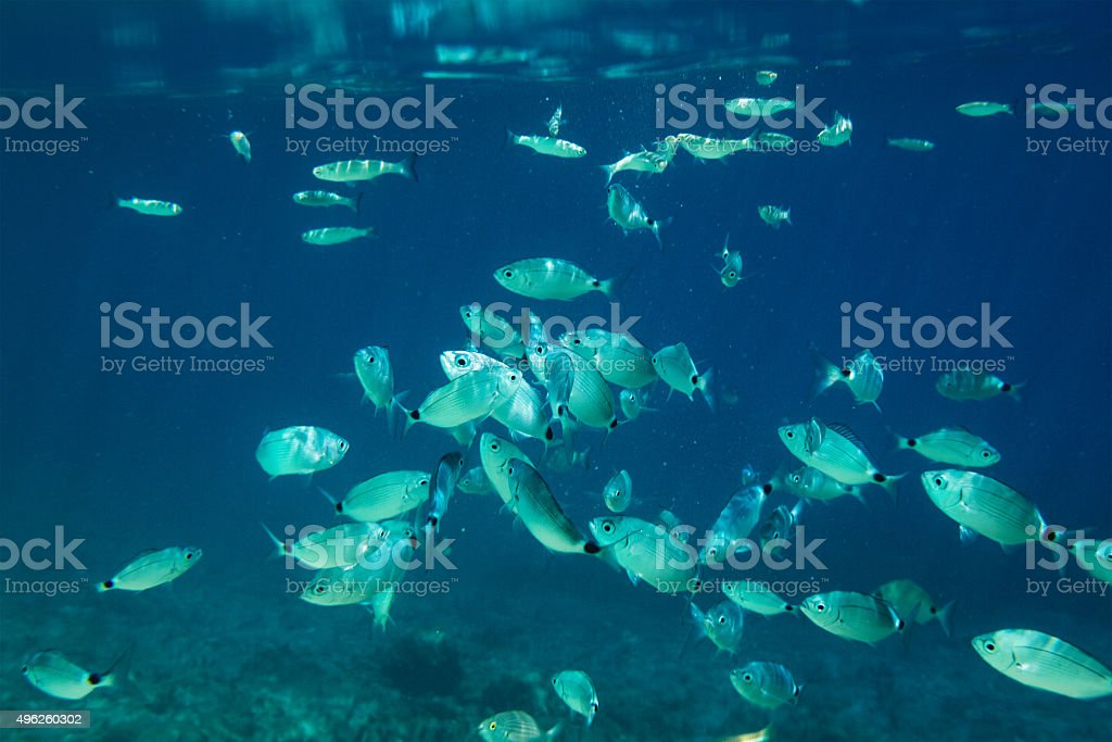 Fishes In The Sea stock photo