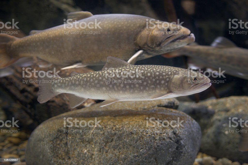 Fishes inside tank stock photo