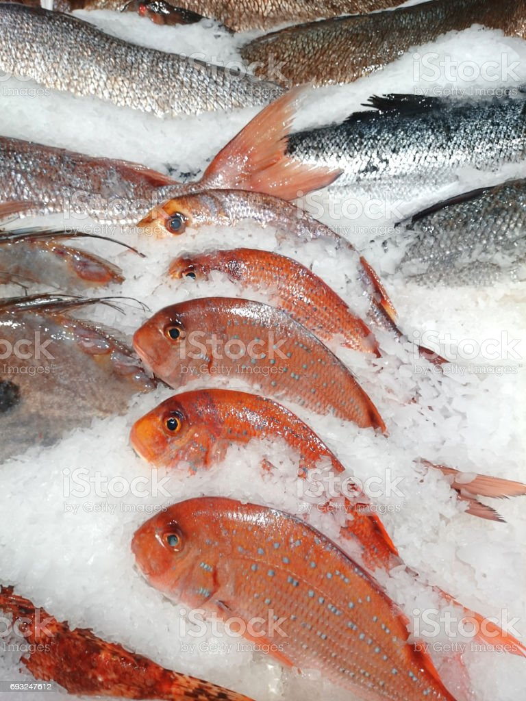 Fishes, on ice stock photo