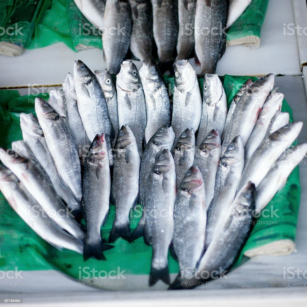 Fishes royalty-free stock photo