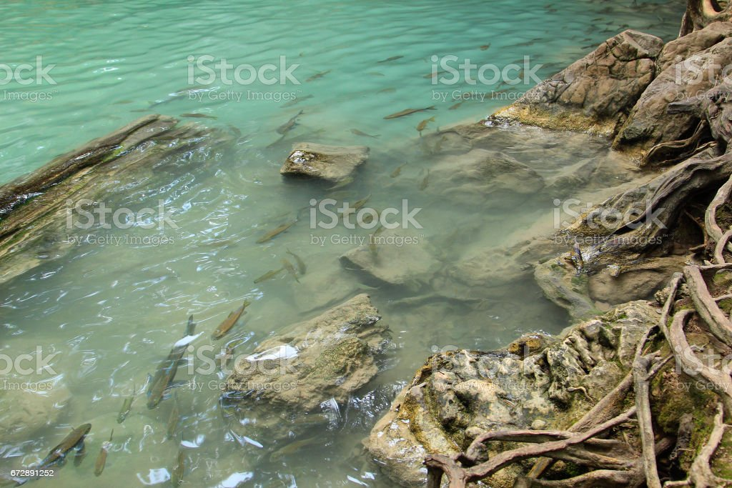 Fishes swimming in a pond, Erawan waterfall, Thailand stock photo