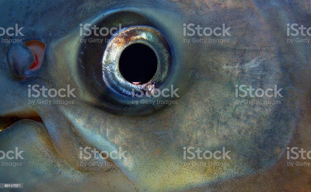 Fisheye Closeup stock photo