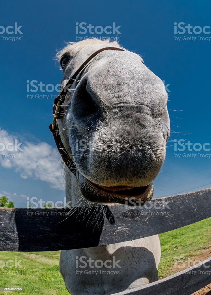 Fisheye of Horse Nose stock photo