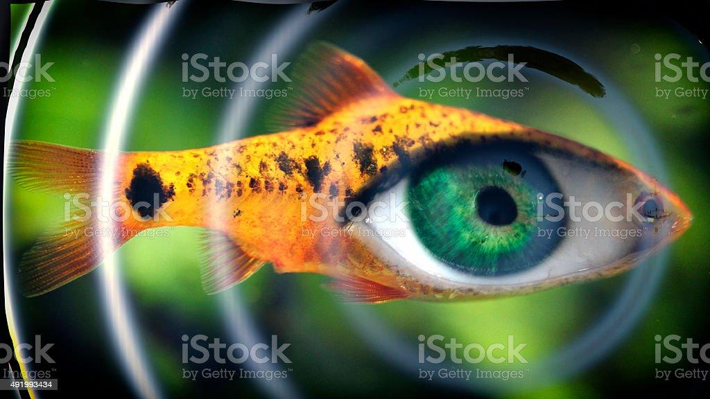 Fisheye stock photo