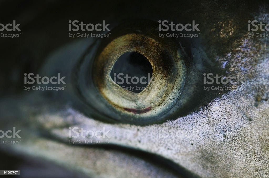 Fisheye royalty-free stock photo