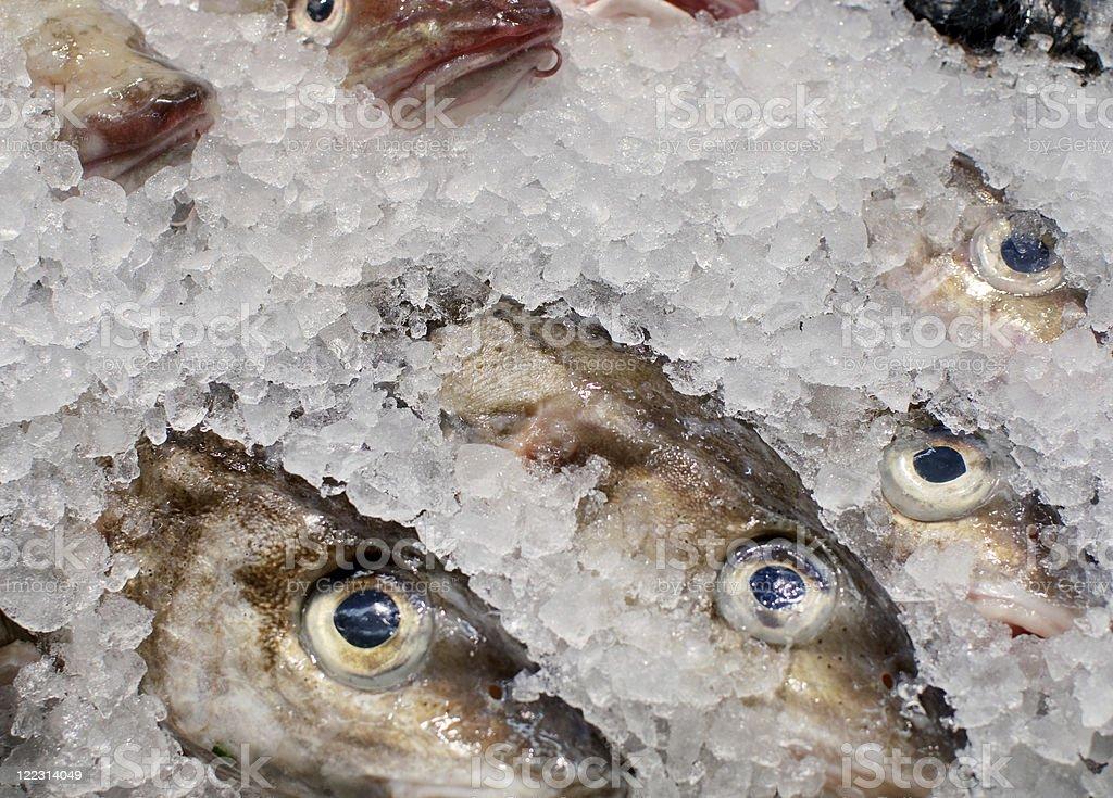 Fisheyes stock photo