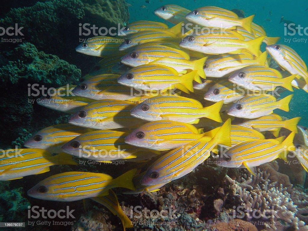 Fishies royalty-free stock photo