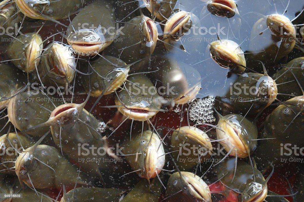 fishies stock photo