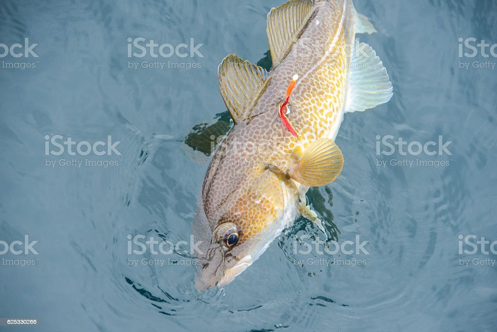 fishing a fish out of the water stock photo