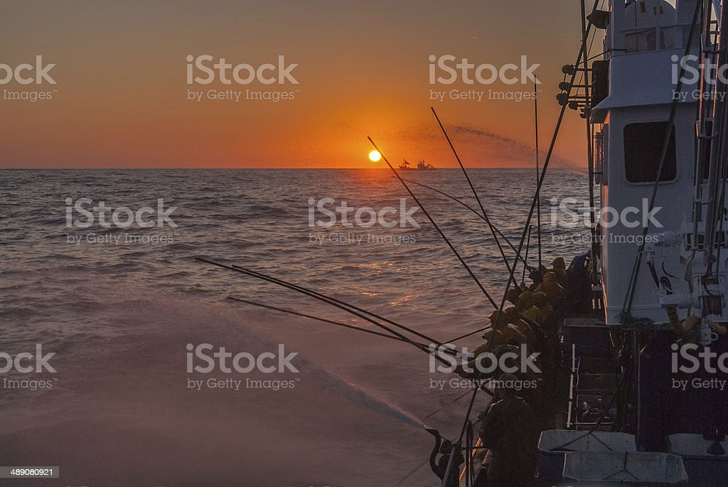 Fishing at Sunset stock photo