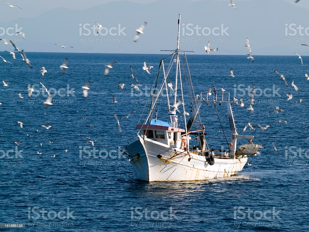 Fishing boat at sea being surrounded by a flock of seagulls stock photo